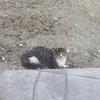 Котенок 4-5 месяцев ищет теплый дом
